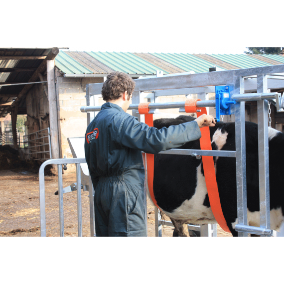Treuil ventrale pour travail à bovin
