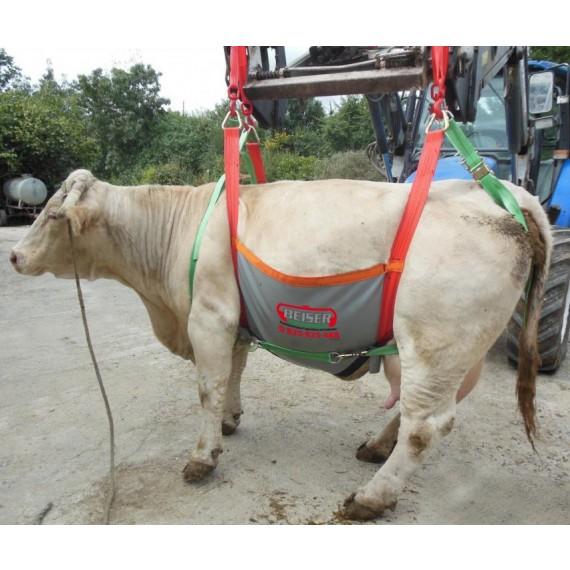 Harnais de maintien et de transport pour bovin