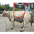 Restraint and transport harness for cattle